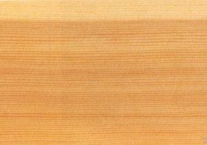 masiv kresba borovice