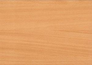 dřevo kresba buk